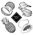 tropical fruits durian pineapple papaya vector image vector image