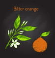 bitter orange branch vector image vector image