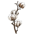 Hand made sketch of cotton plants vector image
