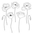 poppies hand drawn vector image