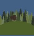 background with forest grass and bison vector image vector image