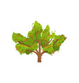big rowan tree with ripe red berries and green vector image