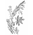 Black and white ink hand drawn wild cereals vector image