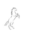 rearing horse vector image vector image