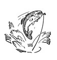 sketch fish being caught vector image