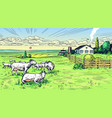 rural meadow a village landscape with sheep vector image vector image