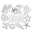 seashells sketch collection vector image