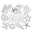 seashells sketch collection vector image vector image