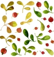 watercolor green leaves and red berries vector image vector image