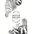 watermelons melons and tropical leaves design vector image