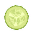 fresh green cucumber slice vector image vector image