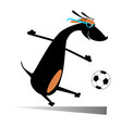 dog playing football isolated vector image vector image
