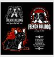 french bulldog - set for t-shirt logo vector image vector image