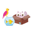 pet shop cat in box fish and bird animals vector image vector image