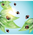 Red ladybugs on the green leaves vector image vector image