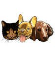 best friends ever - cat and dog vector image