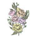 bouquet peonies watercolor hand-drawn vector image vector image