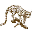 engraving drawing of clouded leopard vector image vector image