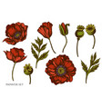 set hand drawn colored poppy flower vector image