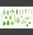 trees and plants leaf collection vector image vector image