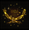 dna molecule half circle golden structure vector image