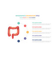 human colon anatomy infographic template concept vector image