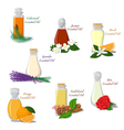 Set of Essential Oils vector image vector image