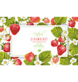 strawberry horizontal banner vector image