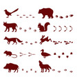 traces of animals foot steps set contour vector image