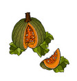 different varieties of pumpkins vector image