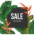 sale background with tropical vector image vector image
