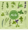 Set of hand draw herbs for food and cosmetic vector image
