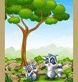 cartoon raccoon with raccoon cub in the jungle vector image vector image