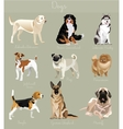 different type dogs set isolated big and small vector image vector image