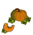 different varieties of pumpkins vector image vector image