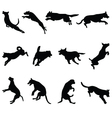 jumping dogs vector image vector image