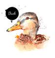 watercolor hand drawn duck head painted sketch vector image vector image
