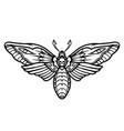 deaths head hawk moth tattoo concept vector image vector image