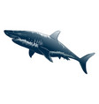 drawing shark in black color isolated vector image vector image