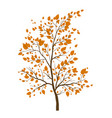 fall tree icon vector image