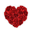 valentines day red roses heart filled isolated vector image vector image