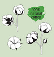 cotton set natural material sign drawing flower vector image
