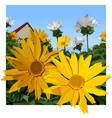 painted yellow chamomile flowers on summer vector image vector image