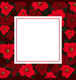 red poinsettia on red banner card vector image vector image