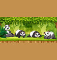 set of pandas in jungle vector image
