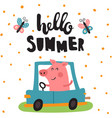 summer pig vector image