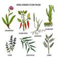 best herbal remedies to cure phlegm vector image vector image