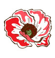 beautiful poppy flower of big poppy bud isolated vector image
