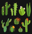 cactuses cactus flower collection exotic summer vector image vector image