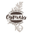 cypress plant spice and herbs isolated icon with vector image vector image